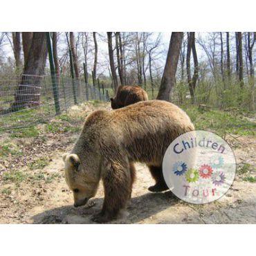 Excursie de o zi la Rezervatia de Ursi Zarnesti