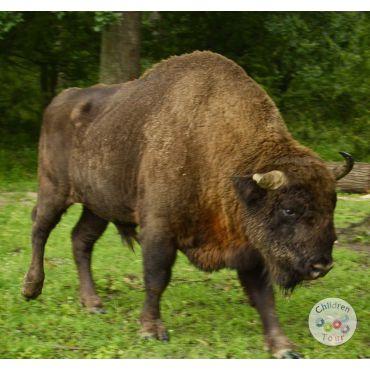 Mai multe despre Excursie la Rezervatia de Zimbri-Targoviste